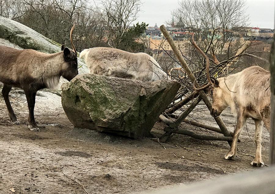 Skansen zoo, Stockholm guide.