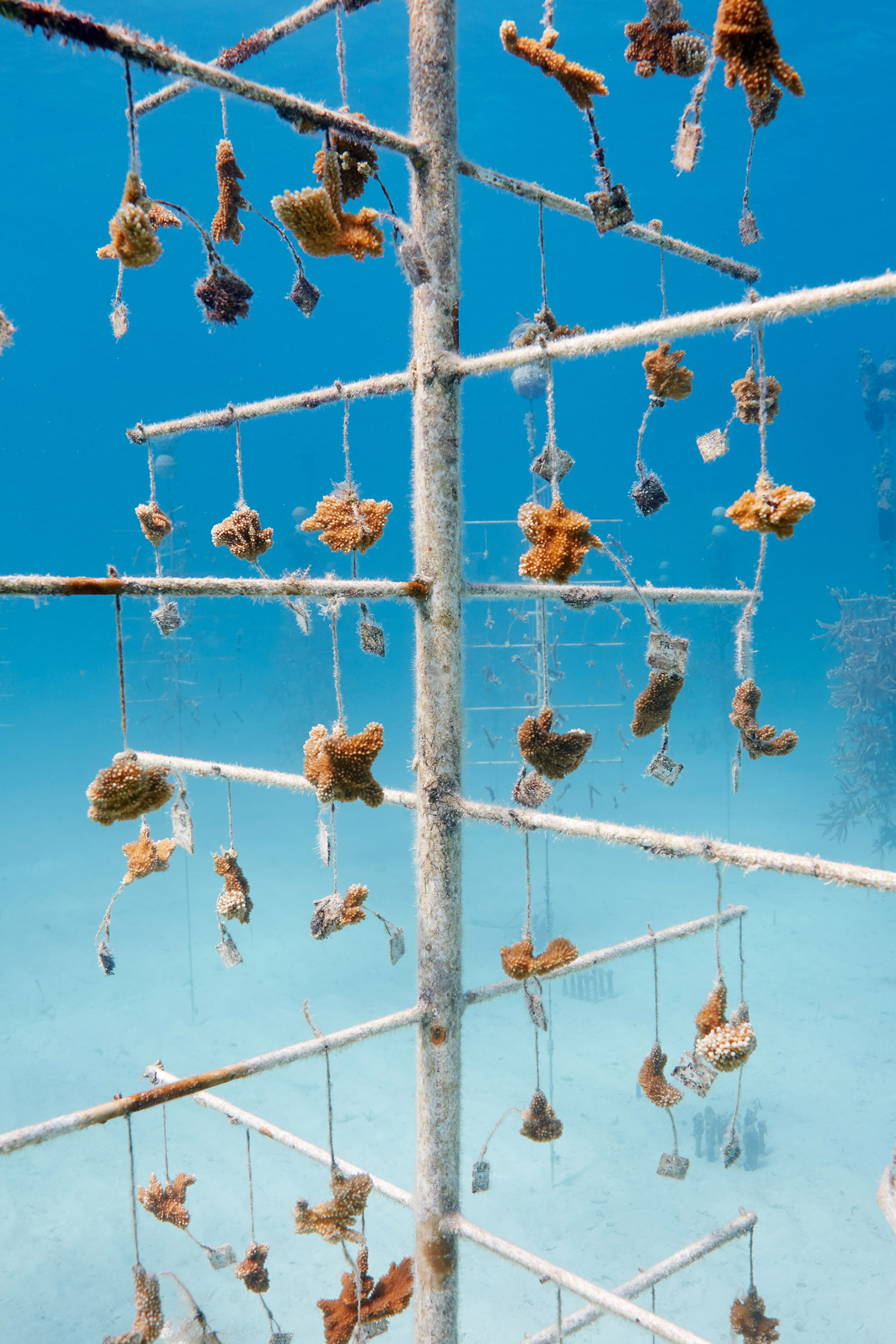 Coral Nursery, Florida Keys, 2017