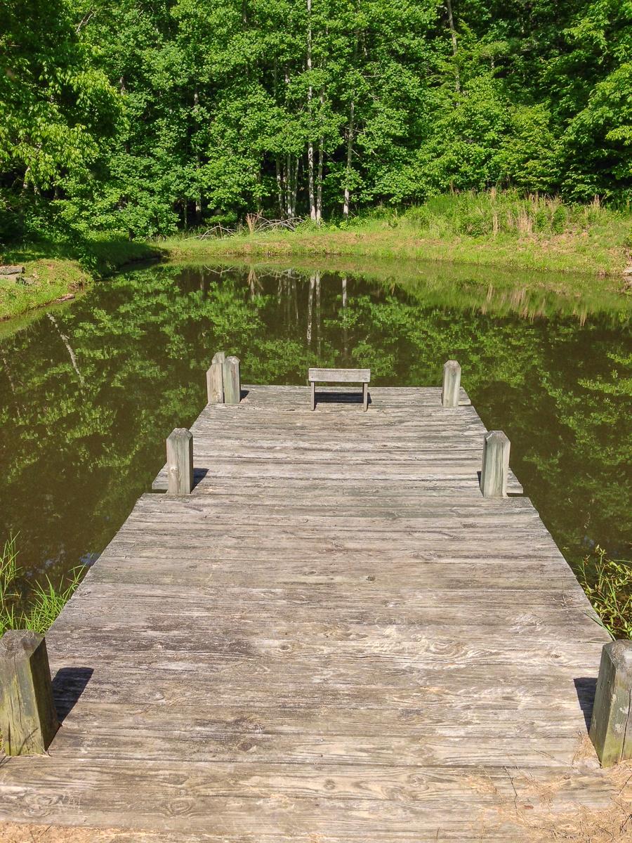 Pond from Dock.jpg