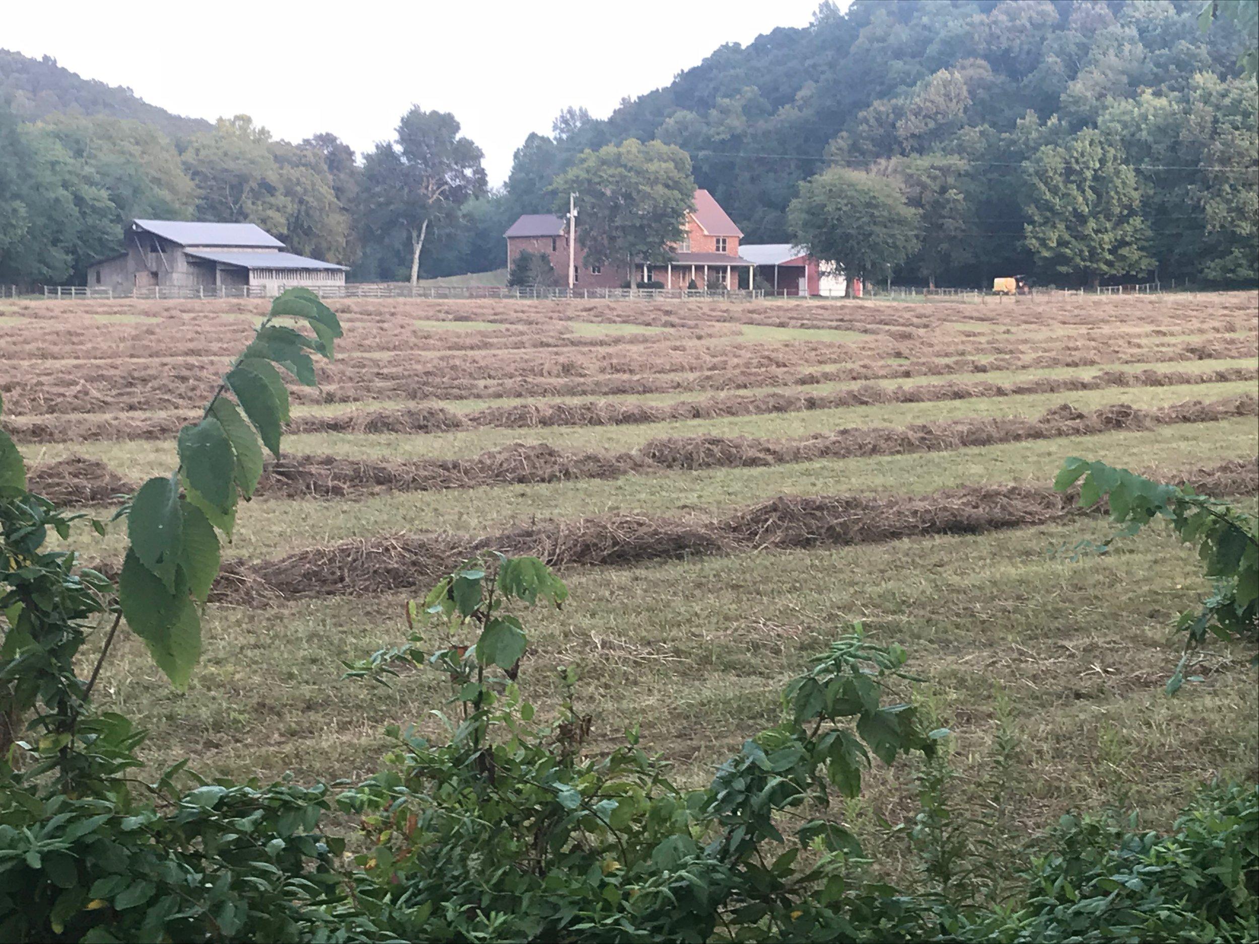 McP Homestead with hay.JPG