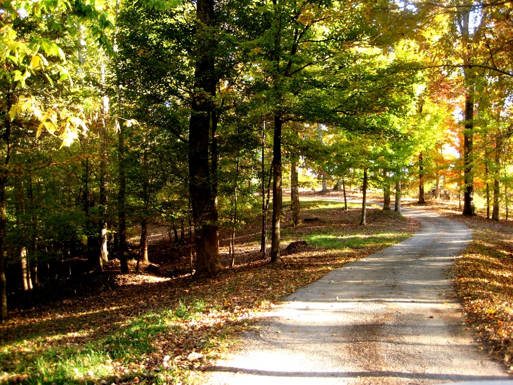 Take a walk on a country road