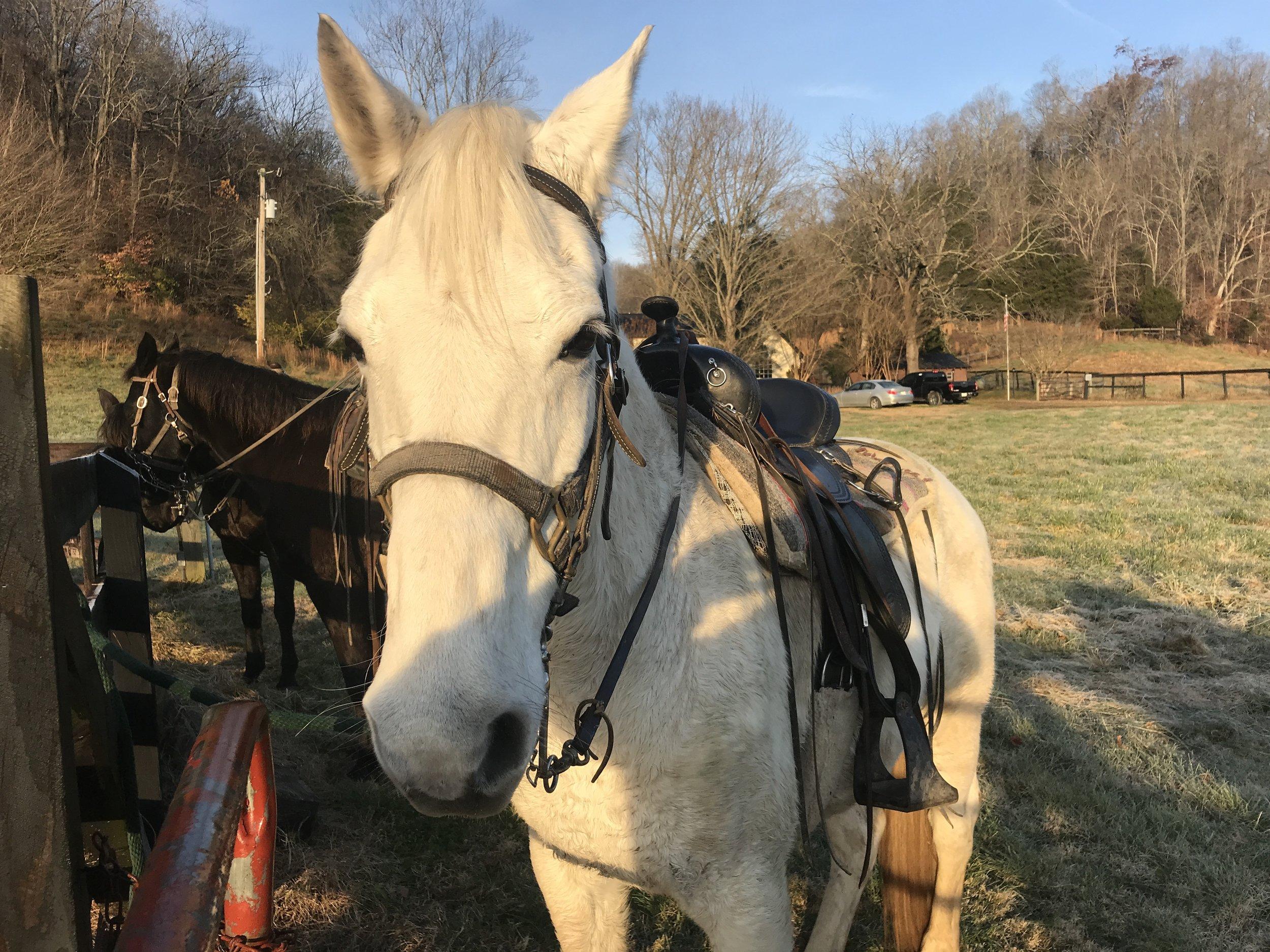 Horse choose me.JPG