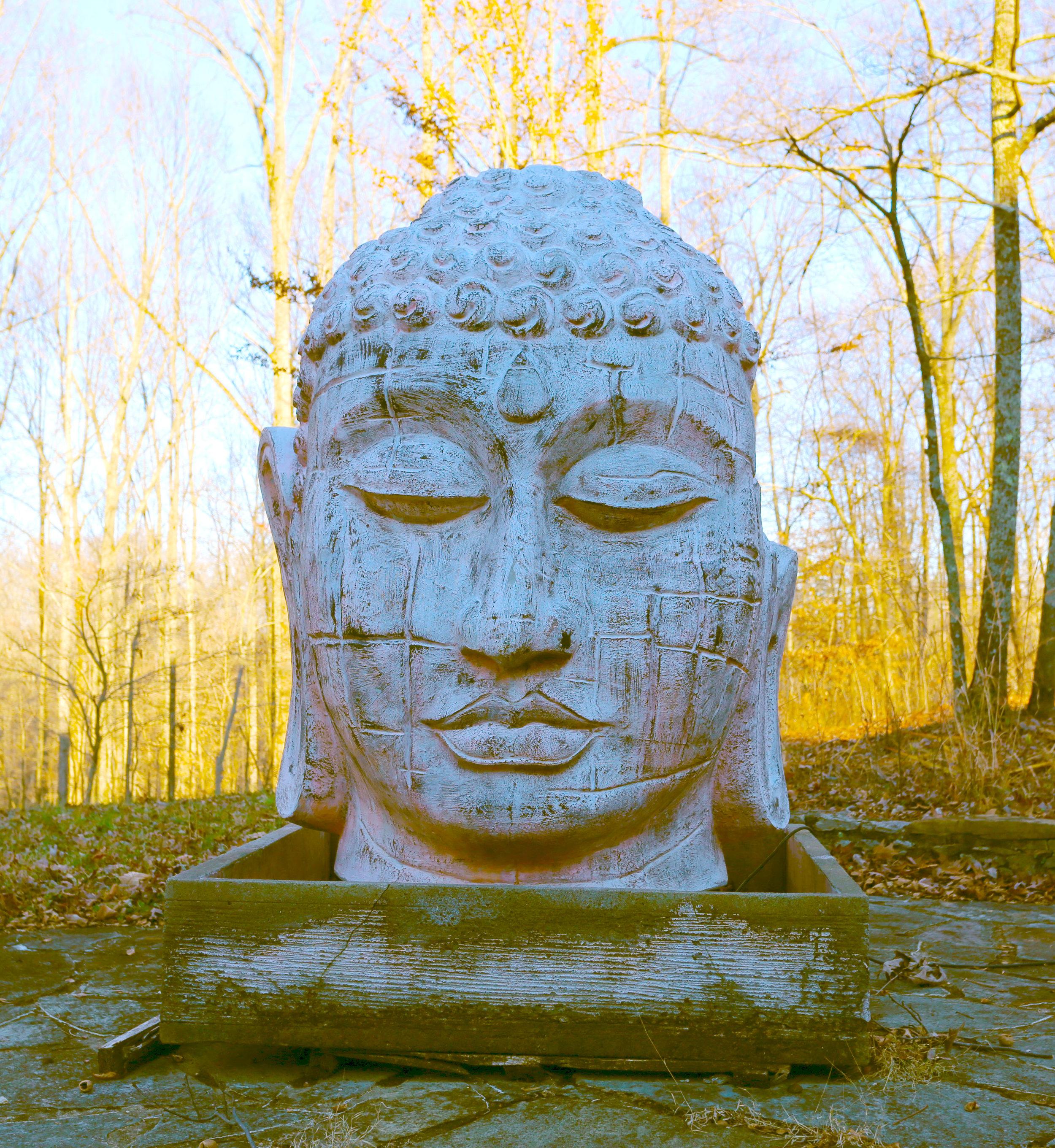 M OS buddhadreamy.jpg