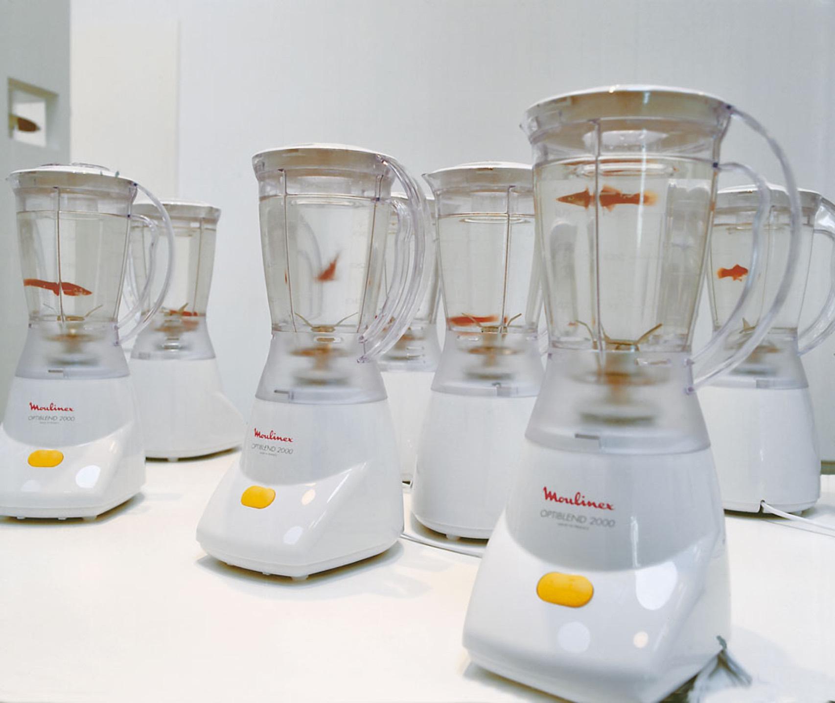 Goldfish in Blender.jpg