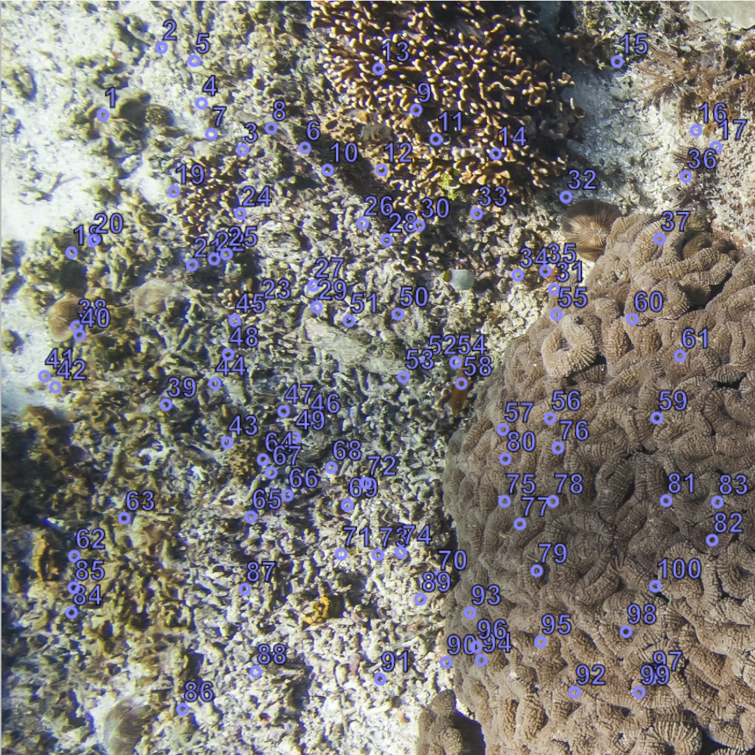 A photoquadrat of the reef with 100 randomized points for identification on the image.