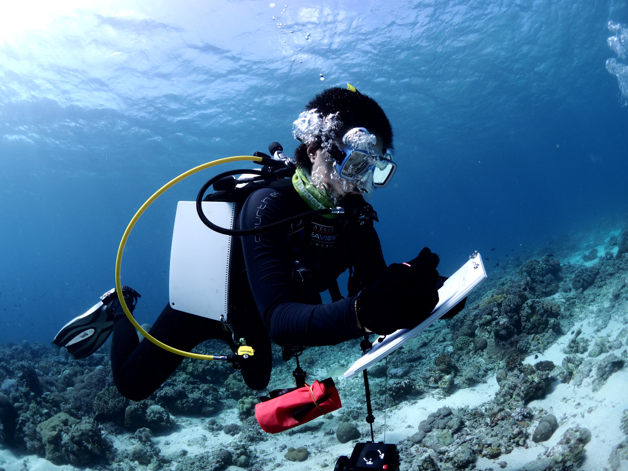 Coral surveys back in Timor-Leste. Photo: F Ryan