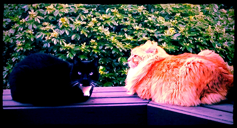 Pictured: DEATH... also my adorable kitties Largo (left) and Fireball (right)... but mostly DEATH
