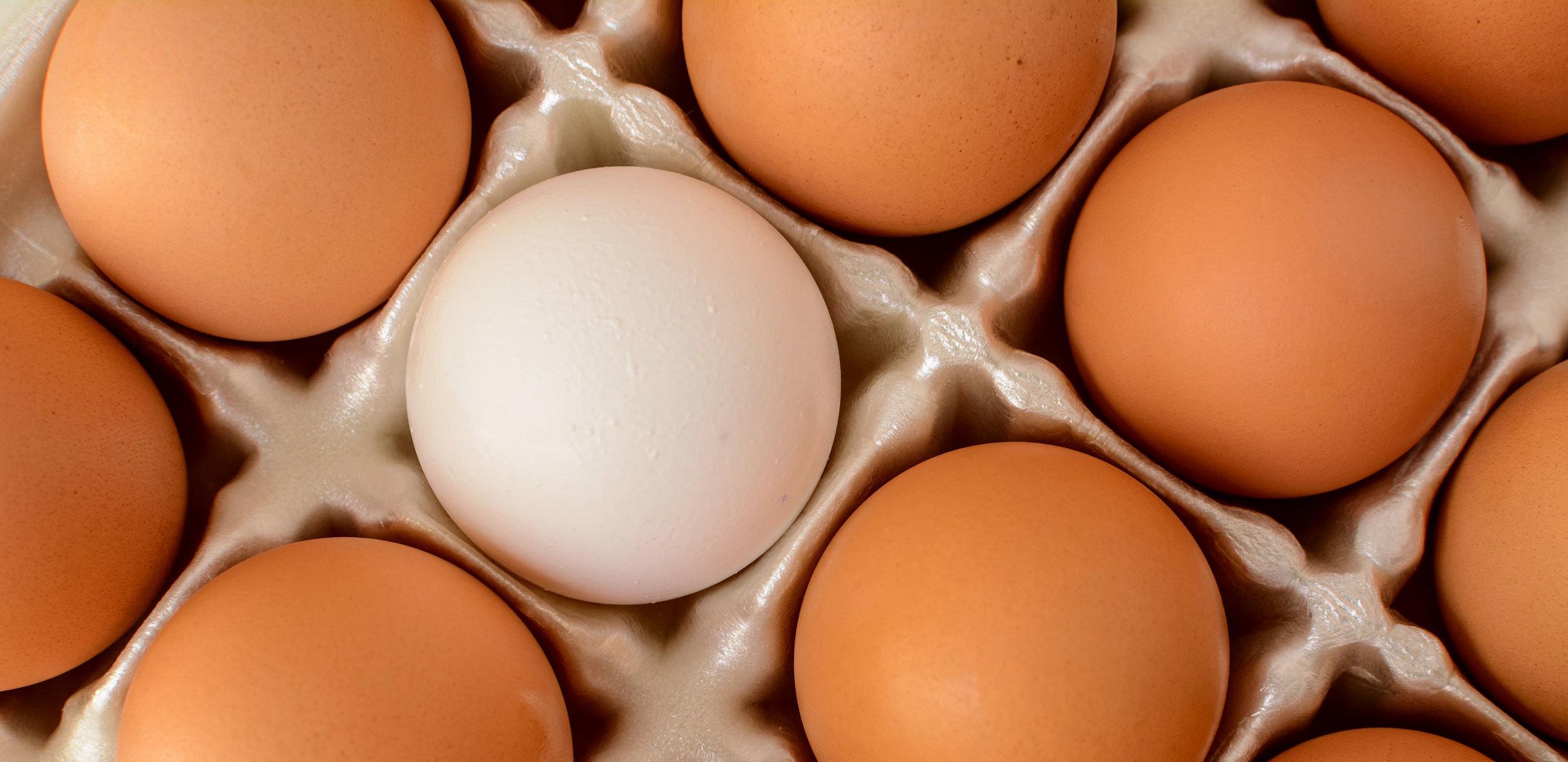 eggsHeader.jpg