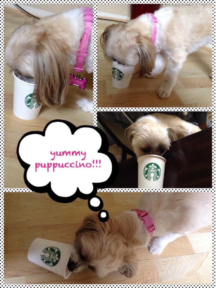 image-3-Charlie-says-yummy-puppuccino.jpg