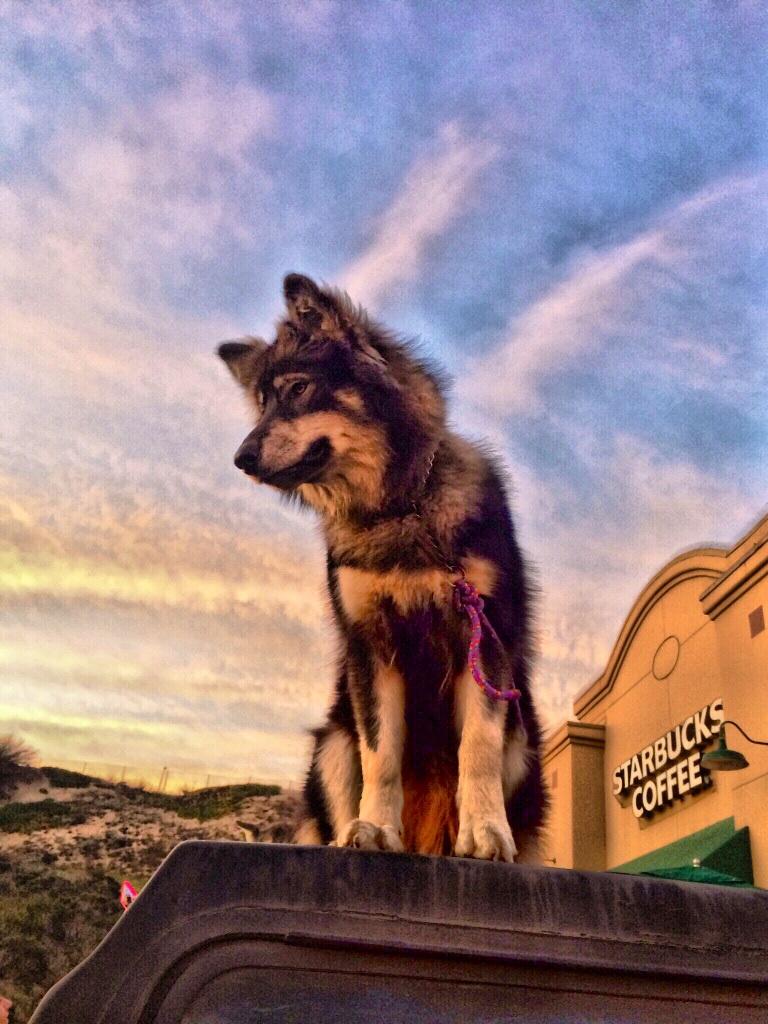 image17-Navi-loves-his-Starbucks-Image-from-Tammy.jpg