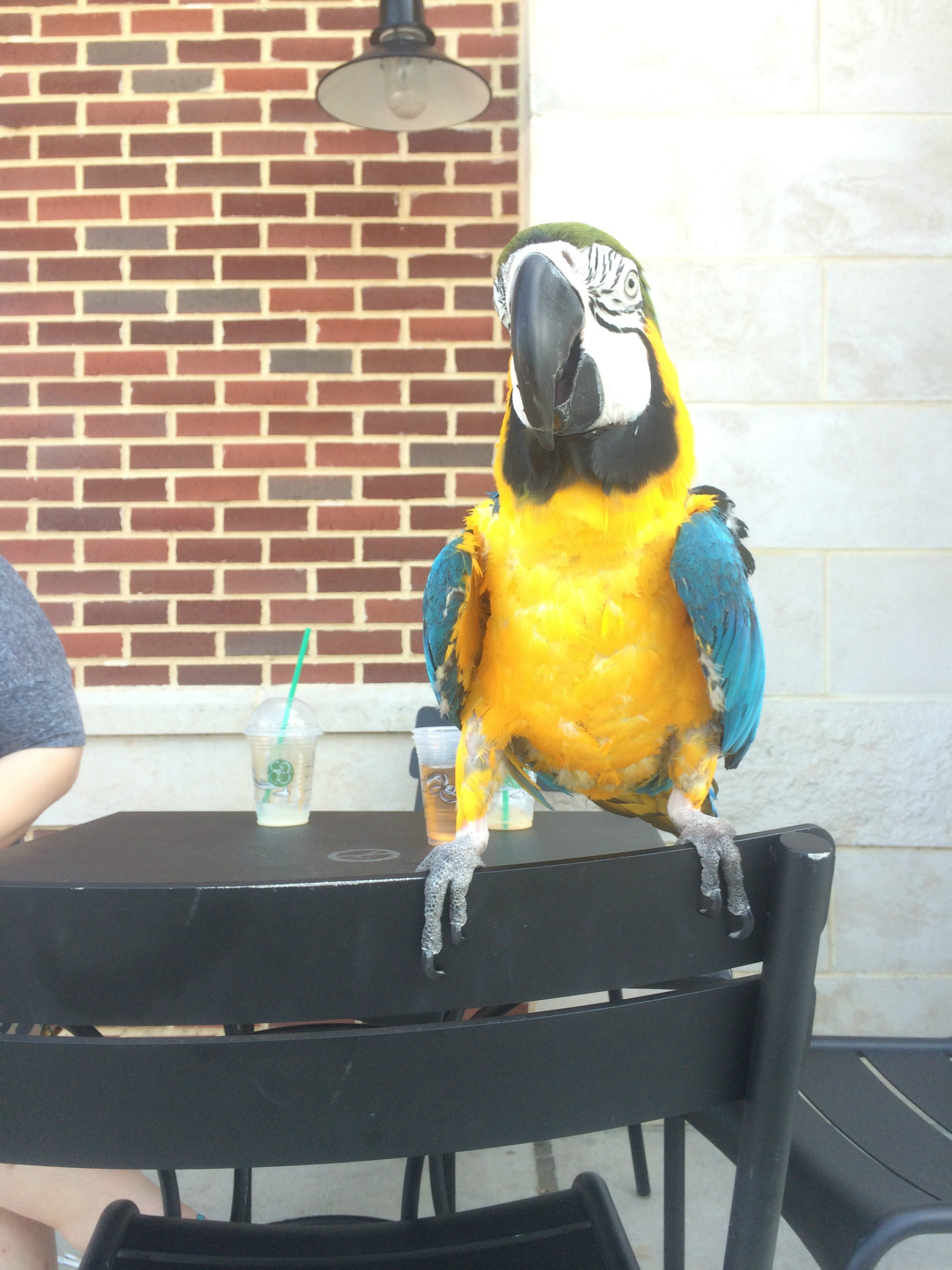 1-1-image-1-Booger-Just-hanging-out-at-Starbucks.jpg