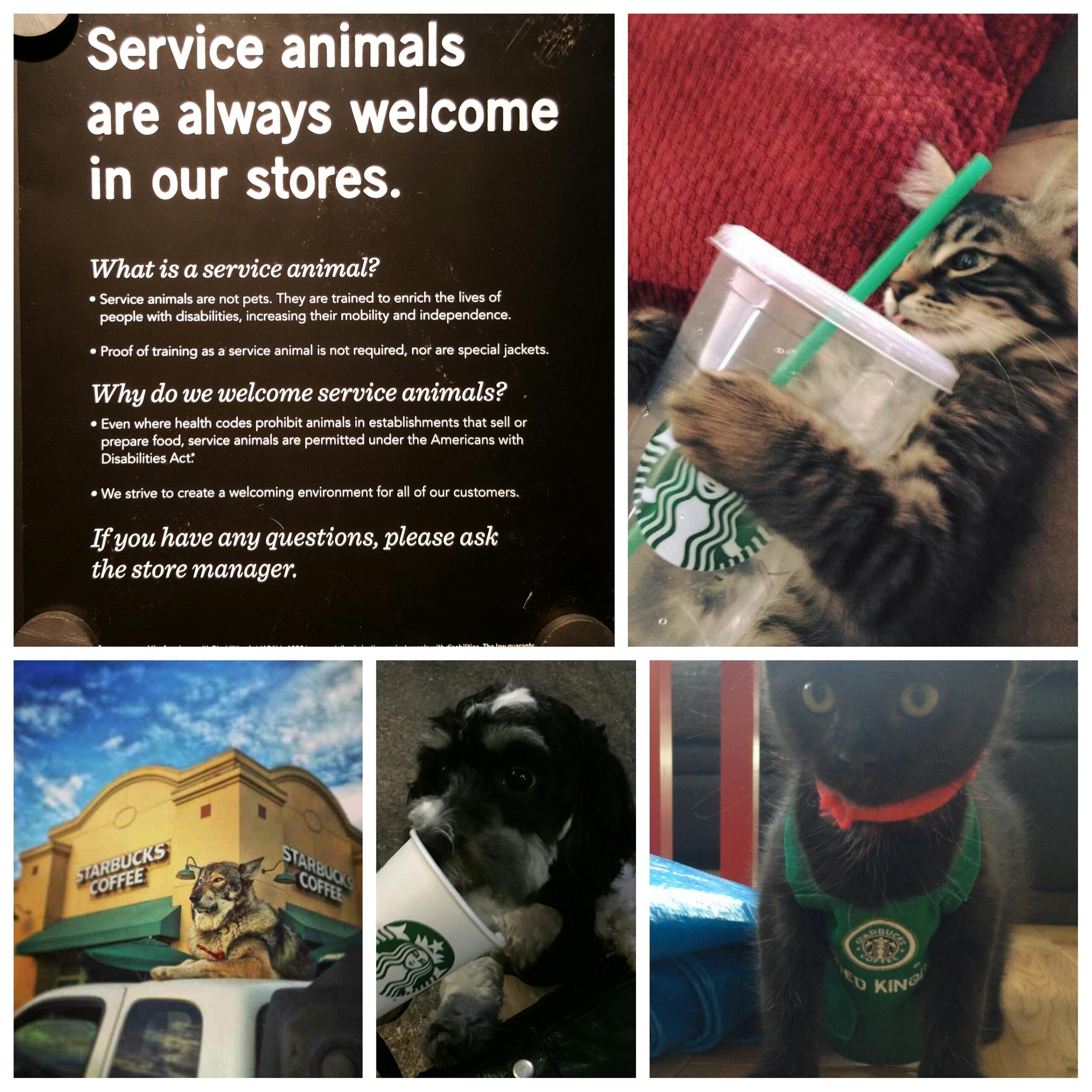 PhotoGrid_1436669909019-Service-animals-welcome.jpg