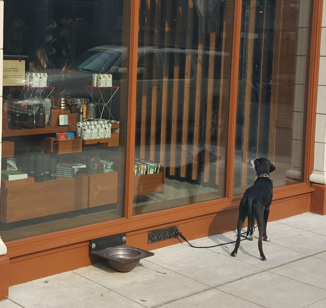 1-1-20150802_093010-Dog-is-waiting-on-mom-or-dad.jpg