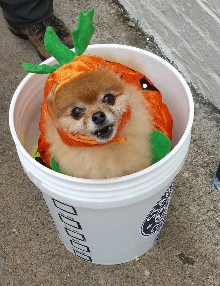 The-Original-Pumpkin-Spice-Latte.jpg