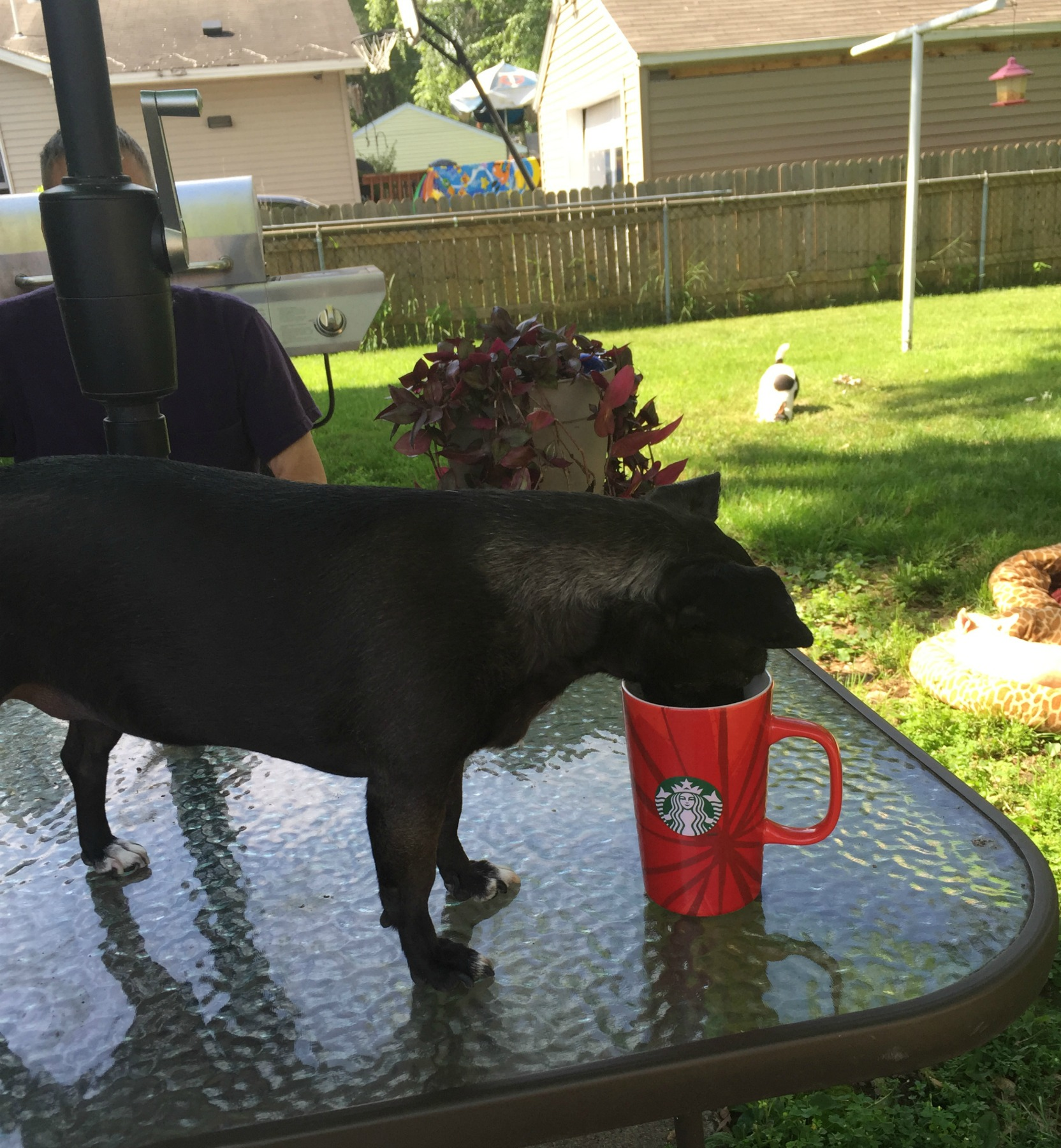 1-1-image-Chica-loves-her-morning-cup-of-coffee.jpg