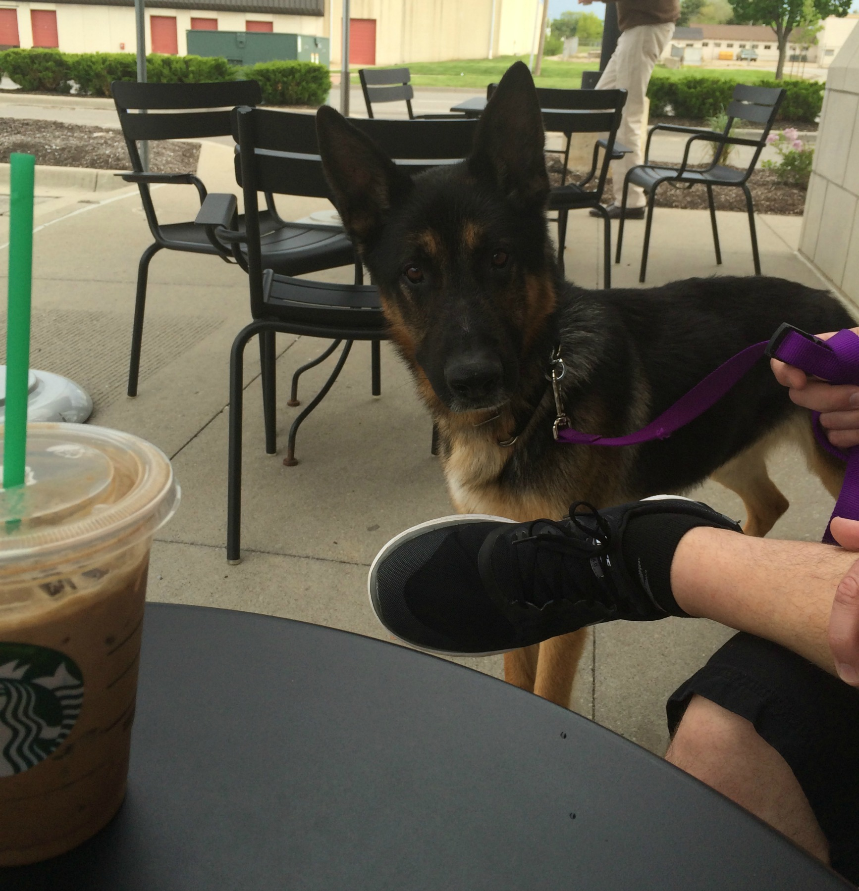1-1-image-truman-stops-by-Starbucks-after-an-adoption-event.jpg