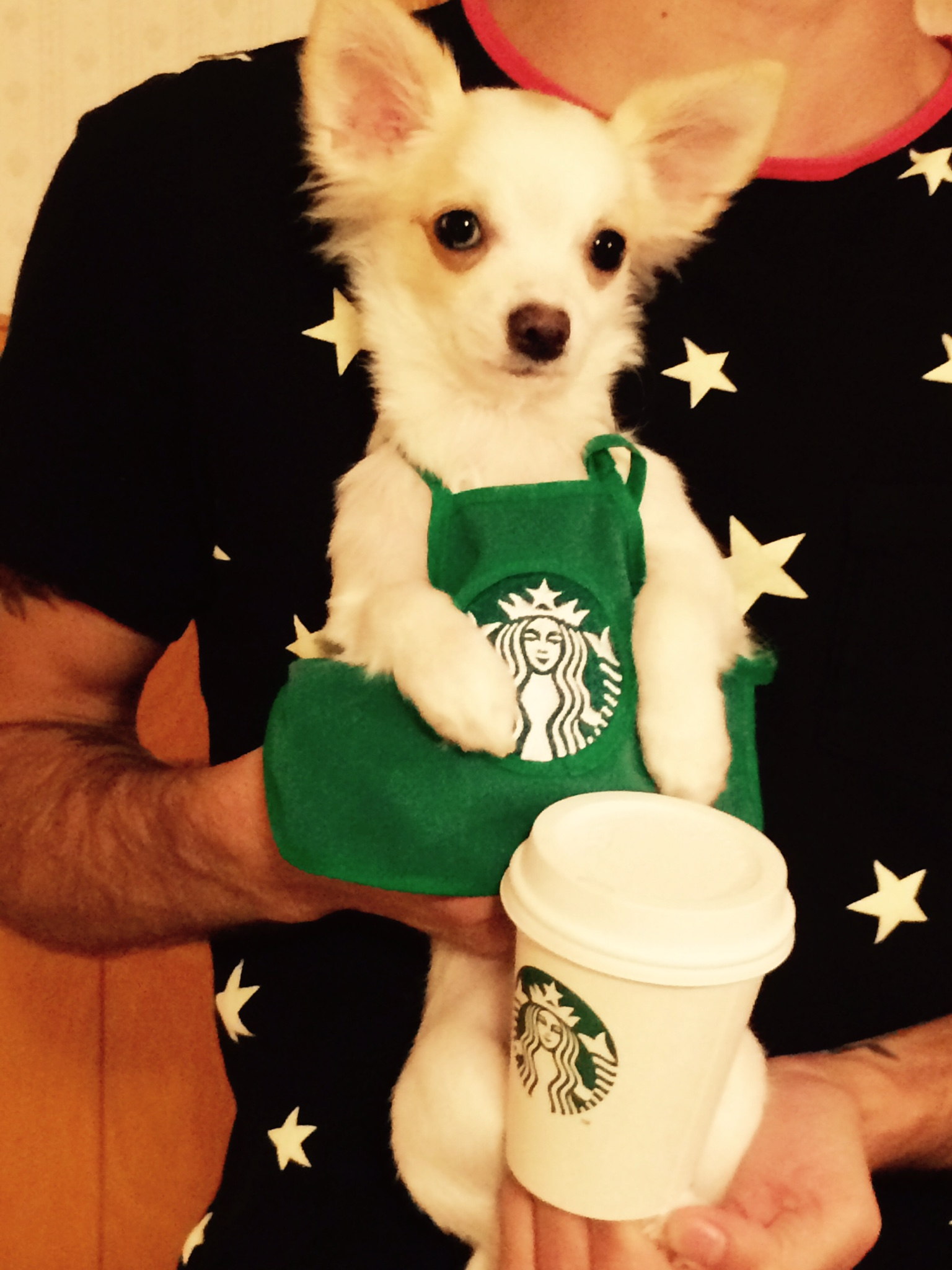 image-Hudson-loves-being-a-barista.jpeg