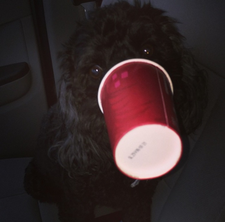 image53 pacey gets a red cup