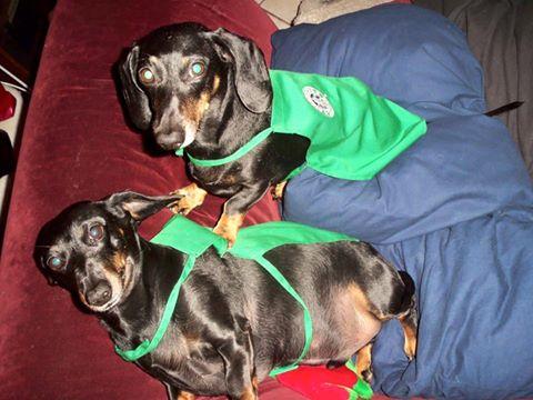Blythe dogs