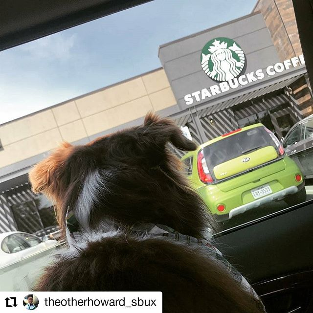 #Repost @theotherhoward_sbux • • • • • • He gets more excited about the drive thru than the dog park #starbucks #starbucksdrivethru #dogparksarefordogs #puppachino #tobeapartner #tobeapartnersdog #tobeapartnersdoggo #starbucksdallas #dogsinthedrivethru #dogswearingbandanas #dallasdoggos #sundayfunday #petsofstarbucks @petsofstarbucks @starbucks