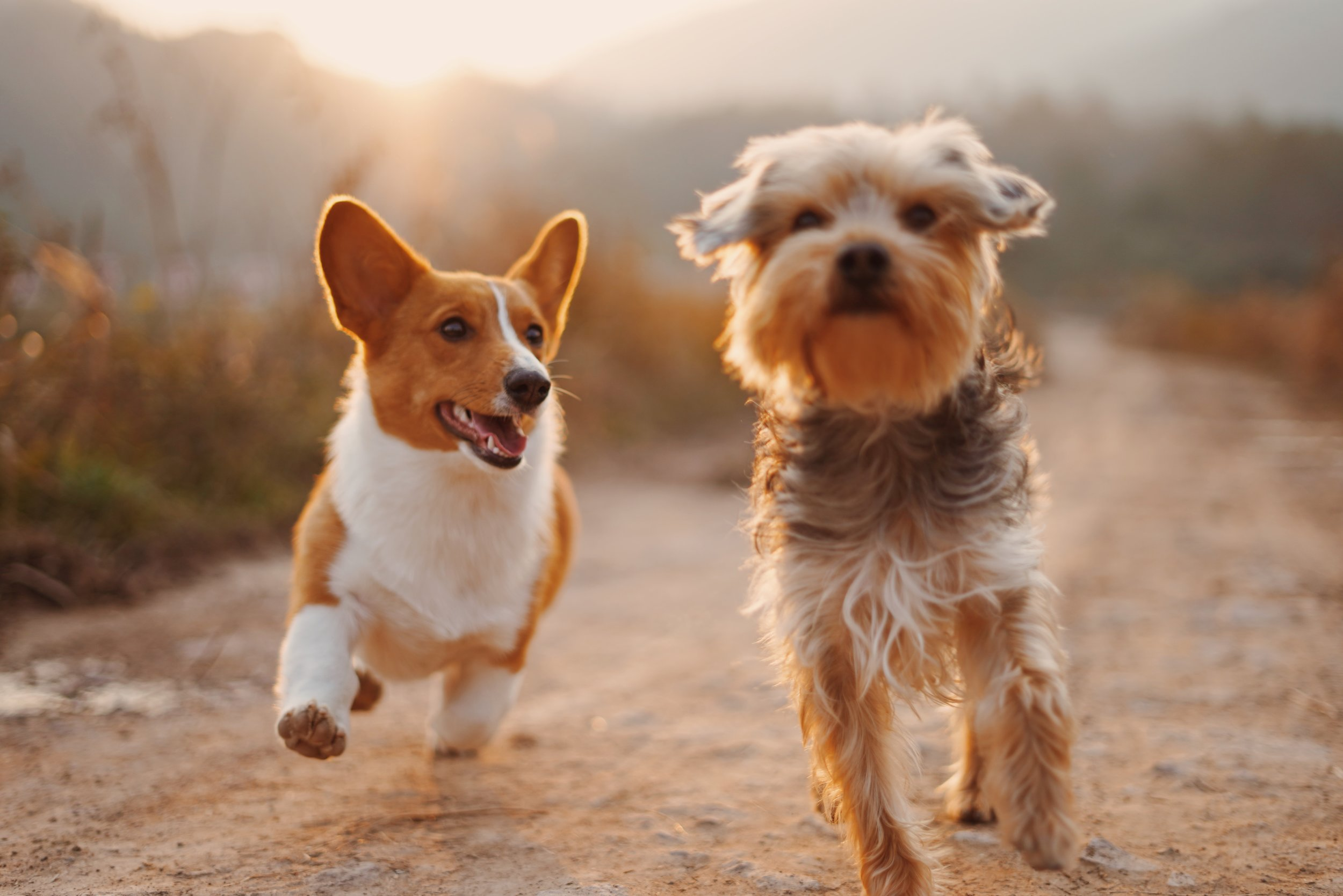Pets Get physical - let us walk your dogs