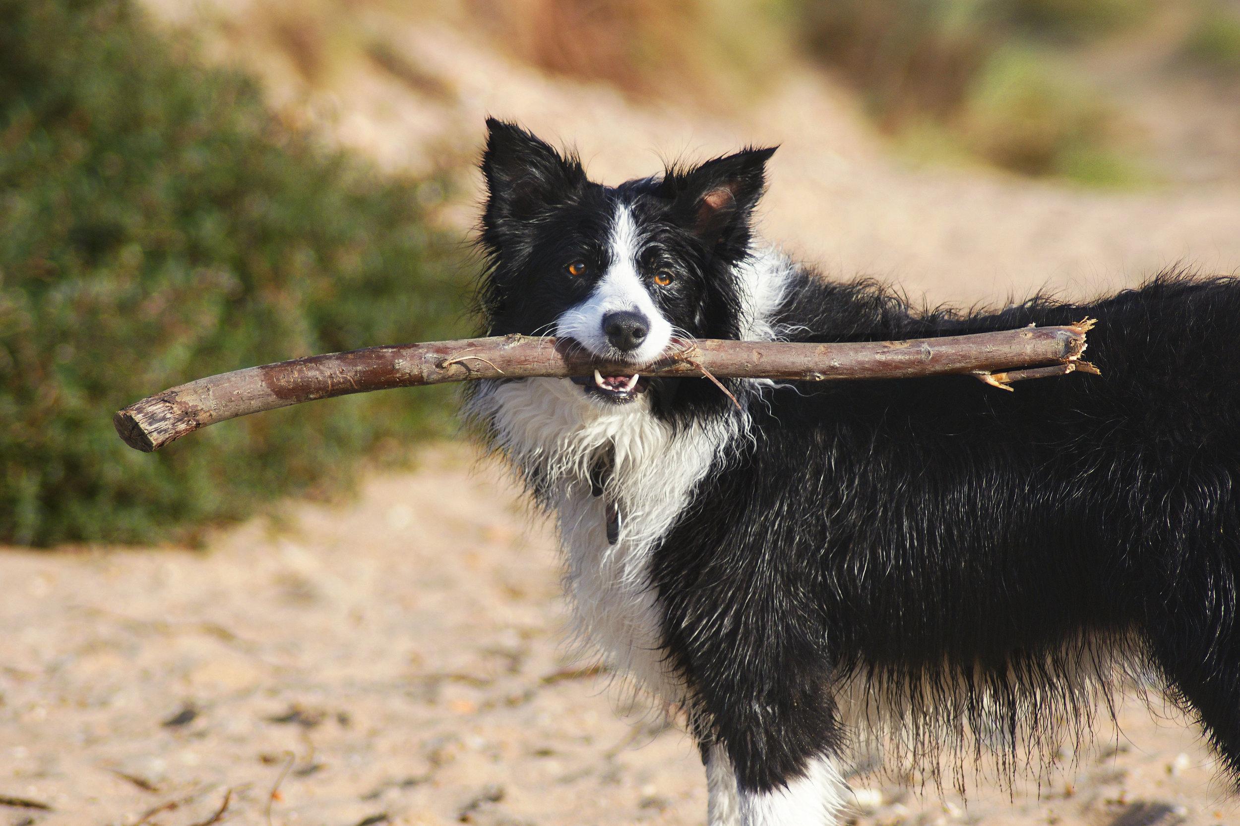 Pets get physical dog walking