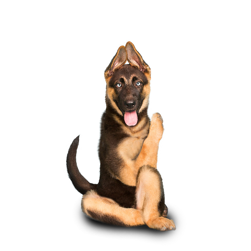 1GSDpup.png (shadow).png