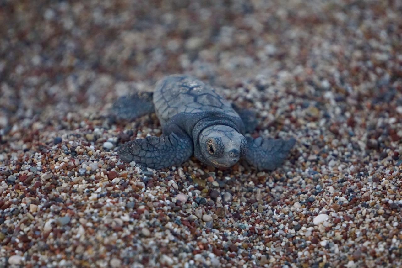 Neues Leben auf den ersten Metern zum Meer.