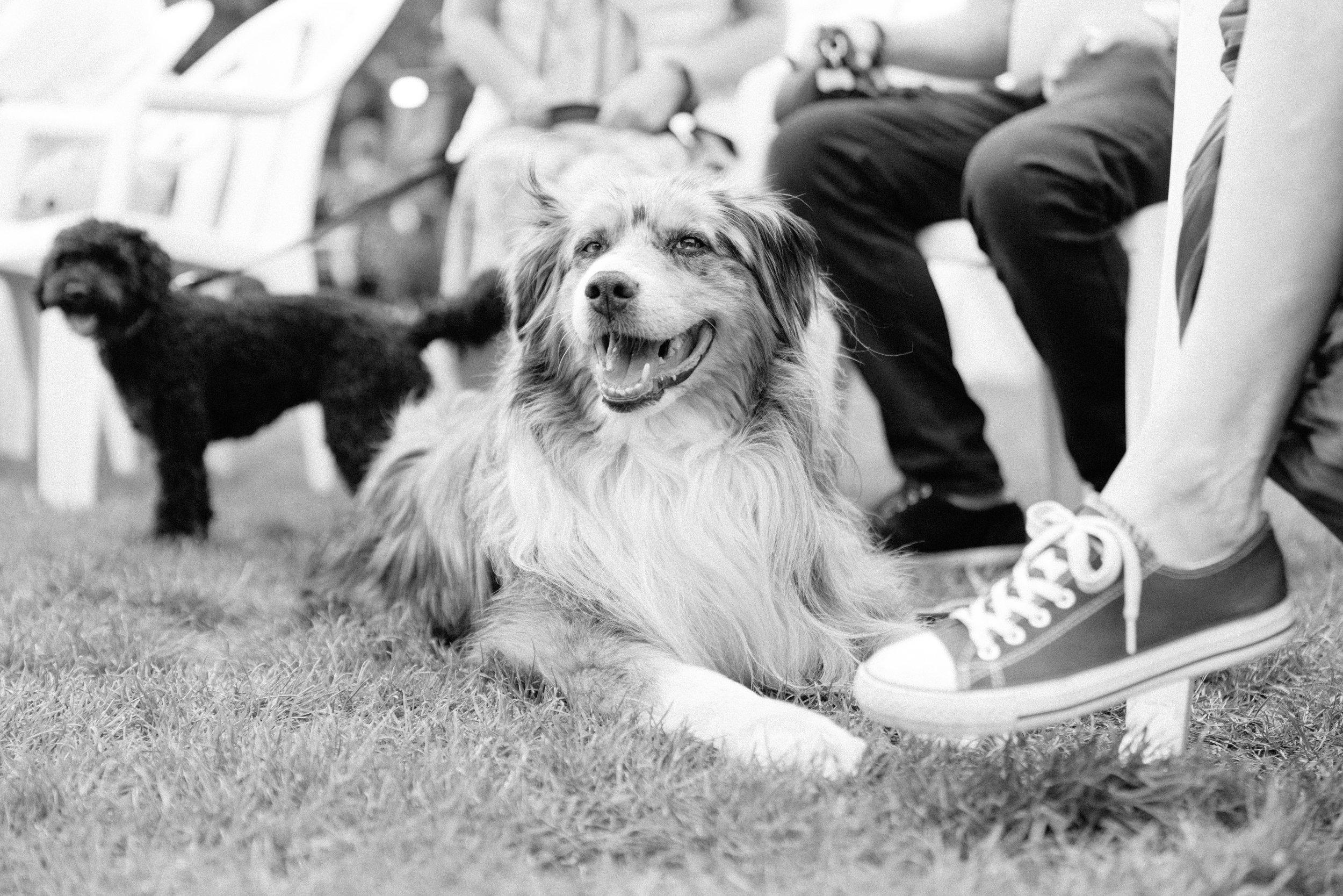 BatterseaPark_DogShow-42.jpg