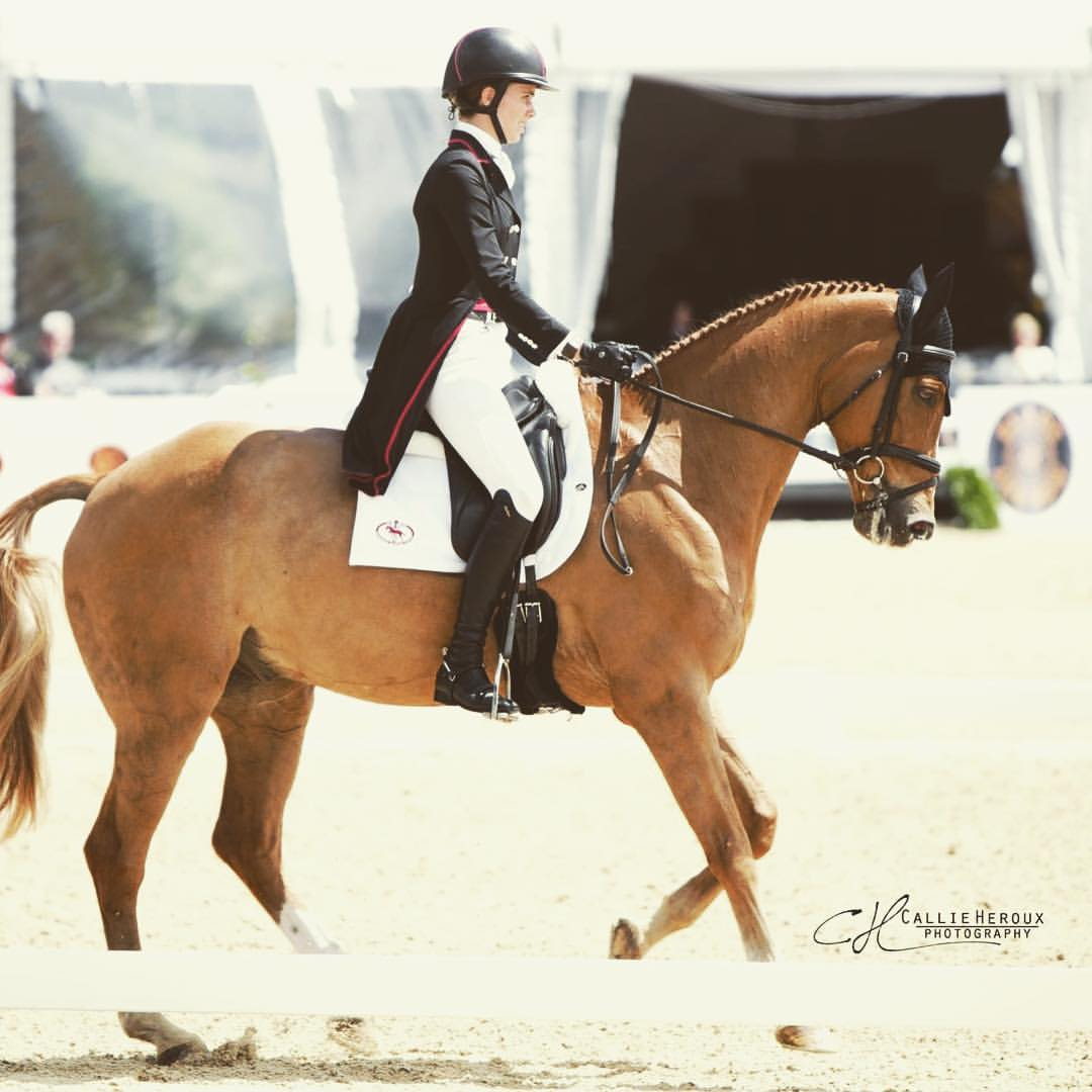 Danger Mouse at Jersey Fresh International CCI3* / Callie Heroux Photography