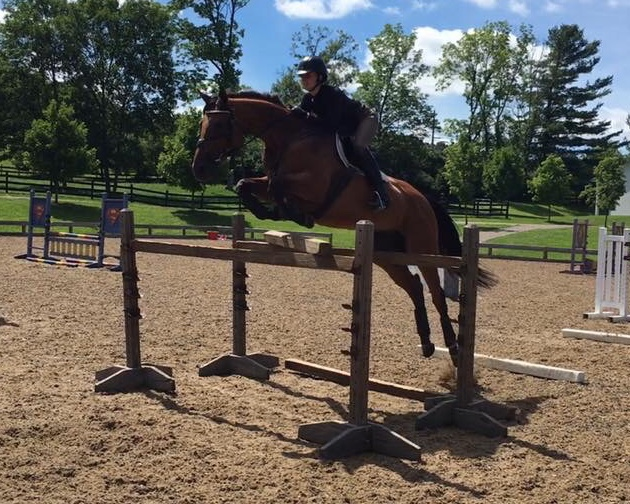 Picture Perfect - 2010 Thoroughbred Mare