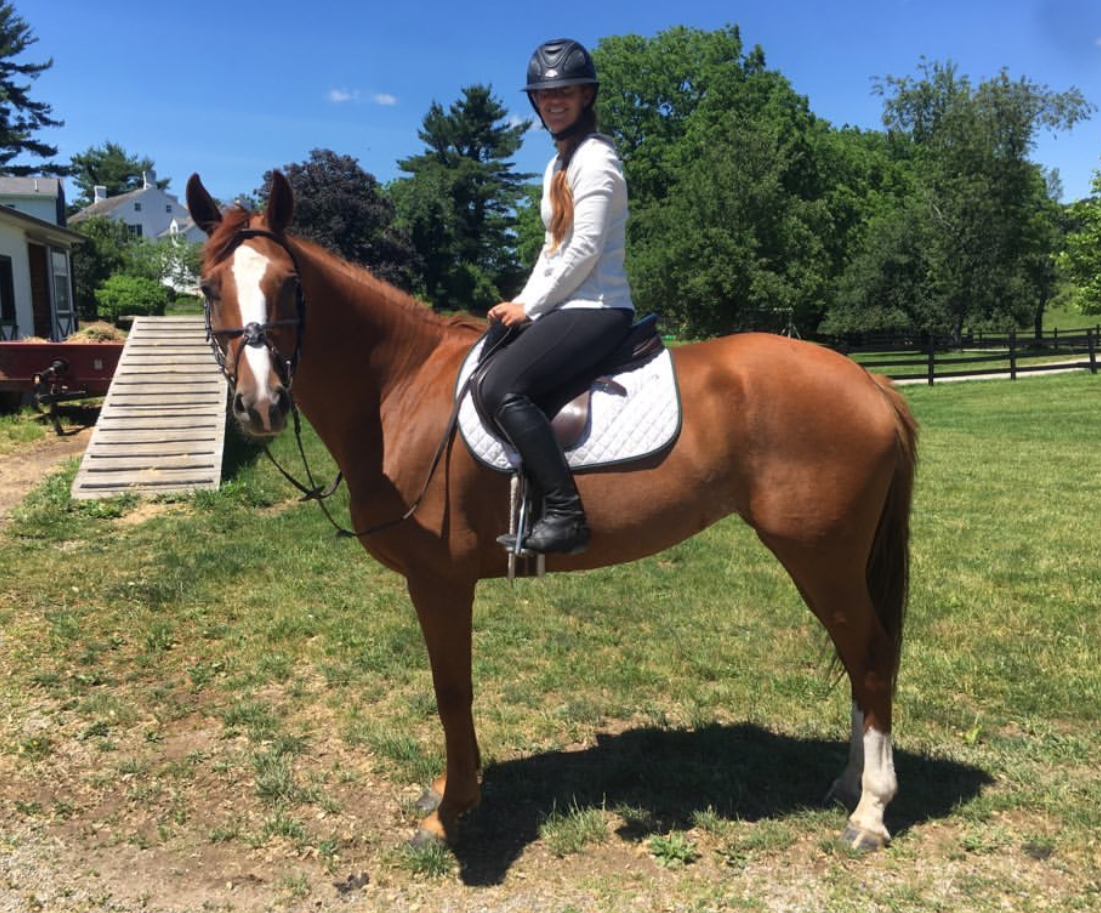 Spice of Life - 2014 Warmblood Mare