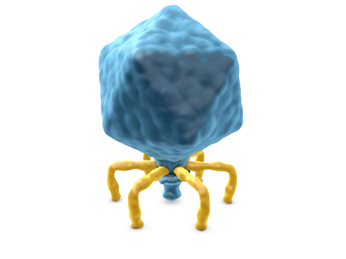 T7-Virus-end.jpg