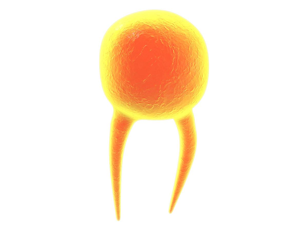 Lipid-end.jpg