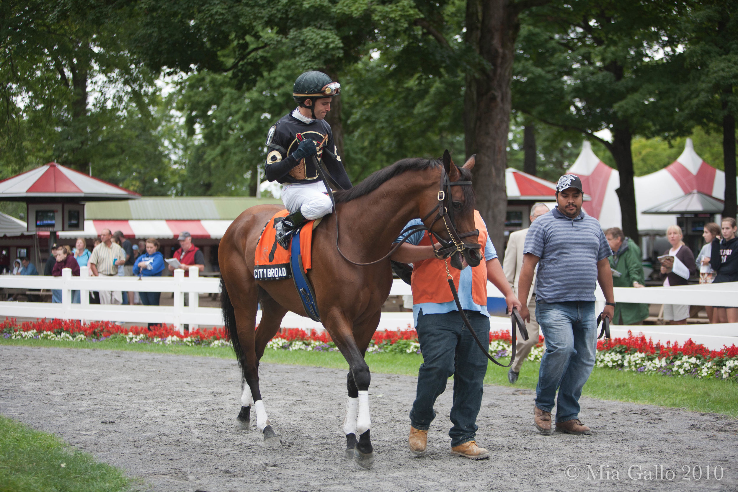 City Broad at Saratoga Race track (Paddock - 2010)
