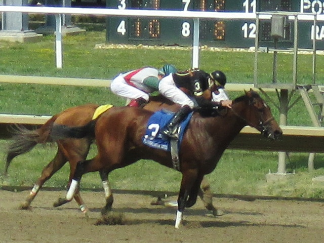 Zippity Goomba at Parx Racing