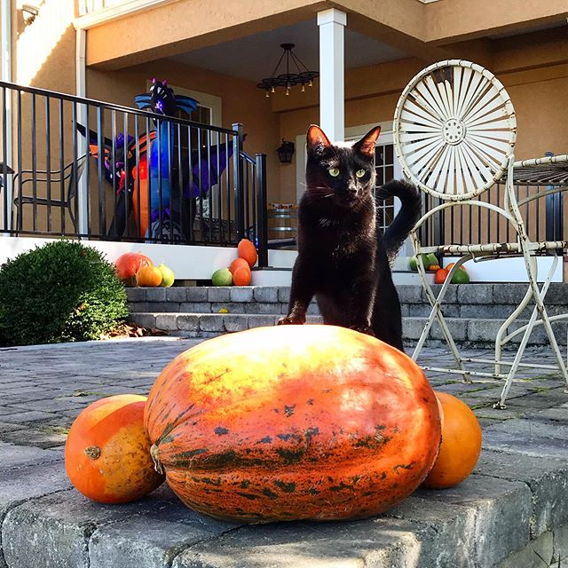 Move over Jack Skellington, Merlin is the new Pumpkin King 🎃 It's starting to look spoooky around here! Check out our event calendar and join us for one of our Halloween themed events! 👻🧟♂️ #jamesrivercellars #merlinthecat #halloween #pumpkins #vawine #rva