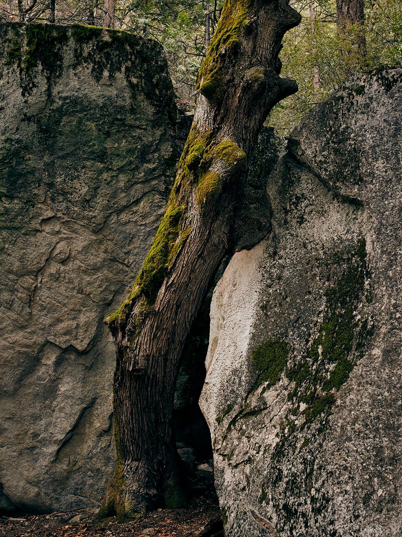 181214-SD-Yosemite-0112.jpg