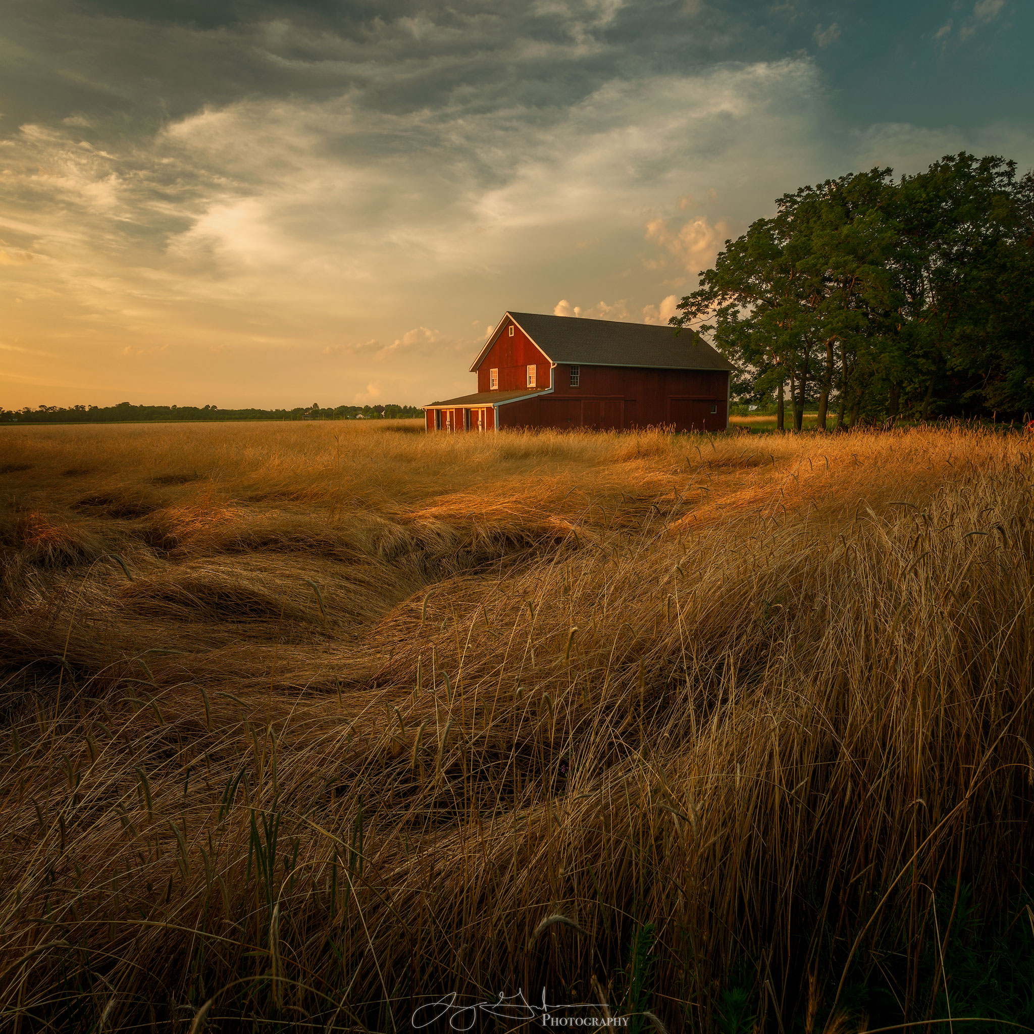 Golden-Barn-#2-copy.jpg