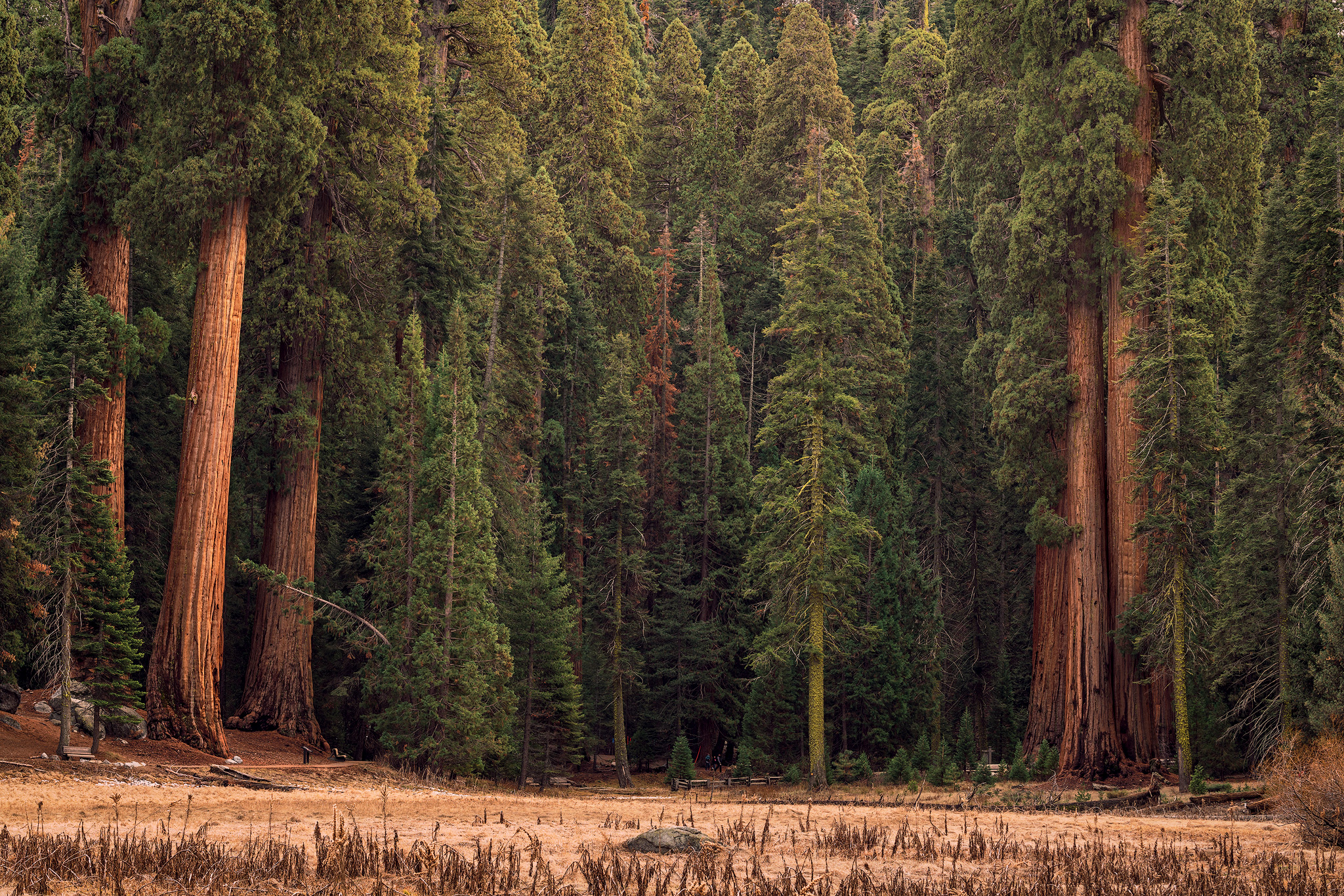 Sequoia-Grove-copy.jpg