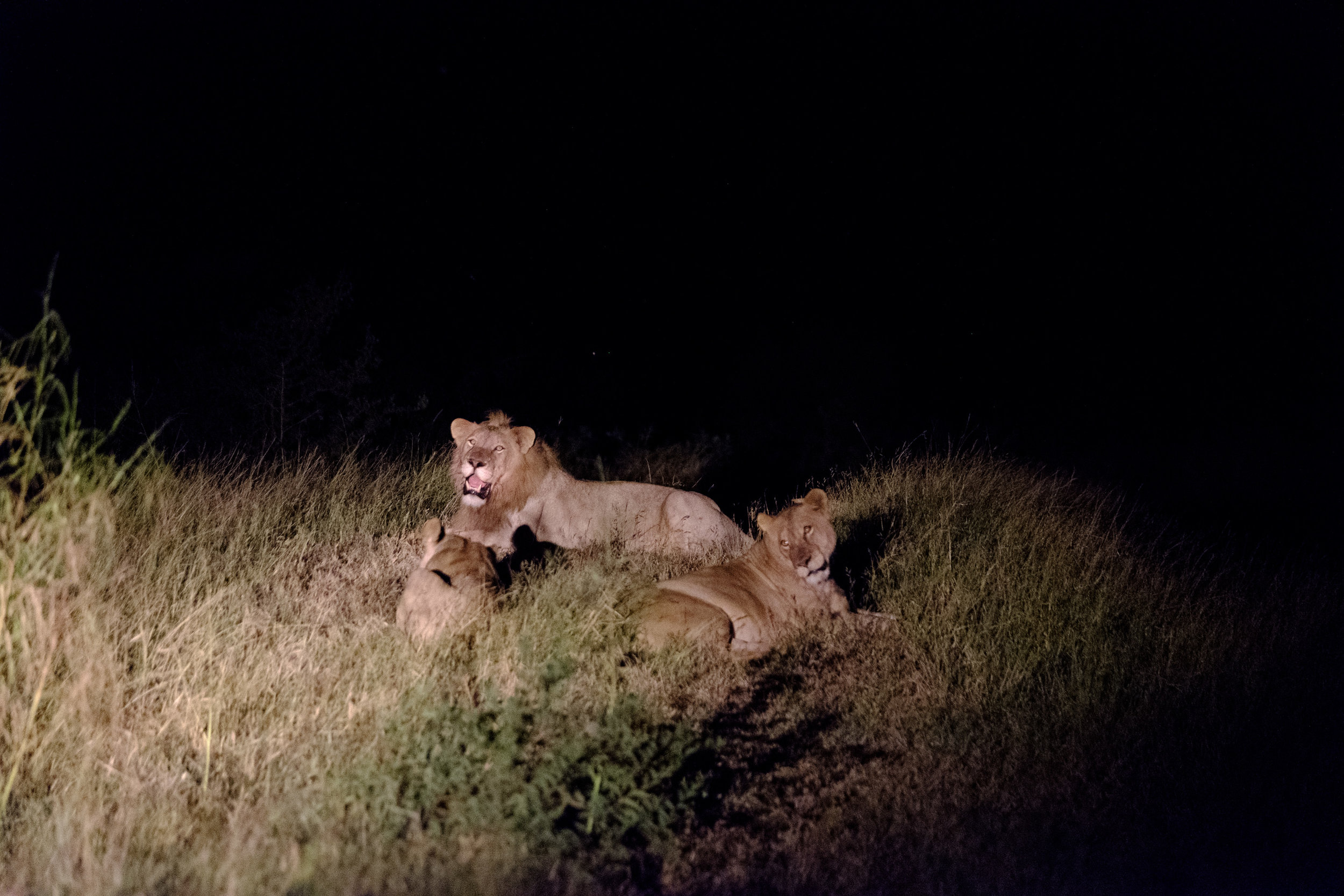 Night game drive, this was taken with a spotlight on the truck - XF 50-140mm, 1/20s, F2.8, ISO 12800