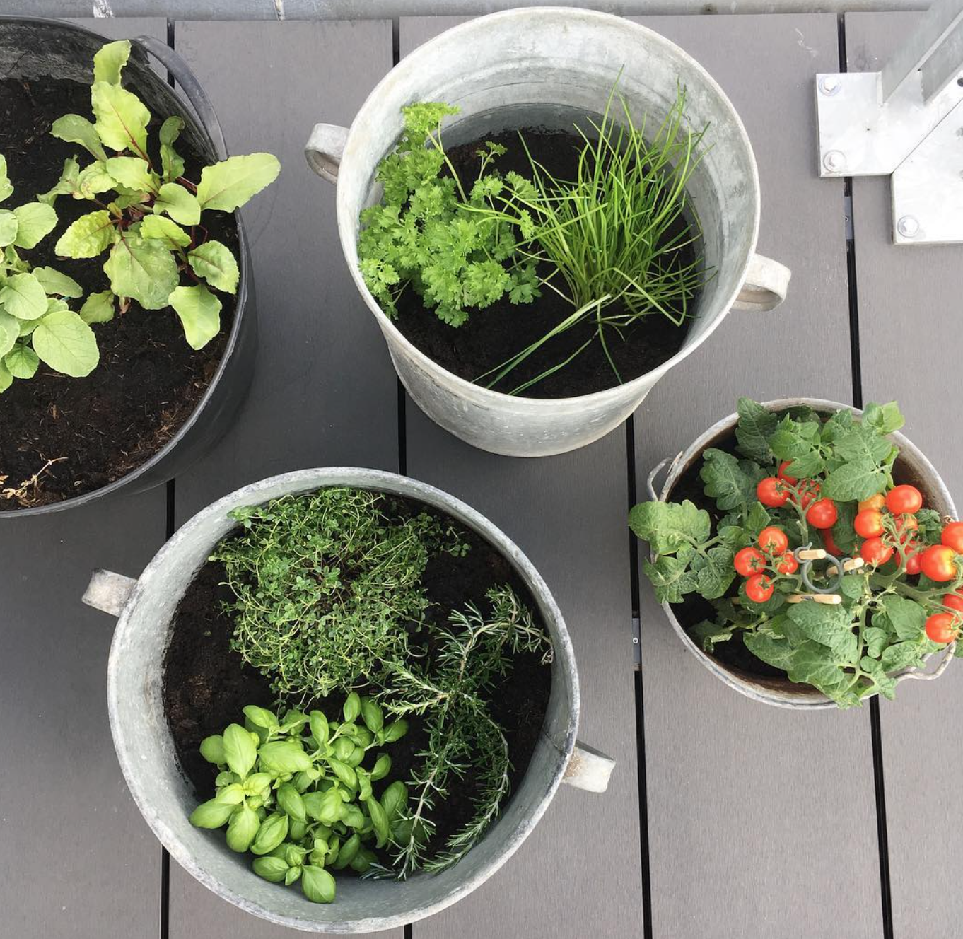 2. you don't need a lot of space or skill to have an herb garden