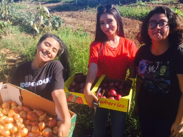 Iris, Rosa, Evelyn and Abi (not pictured) are the FoodWhat Farm Managers at our North County site this fall. Over the past two months they have been managing the fields, irrigating, weeding, implementing the crop rotation, cover cropping for winter and leading weekly harvests for the FoodWhat low-income farm stand at Gault Elementary.