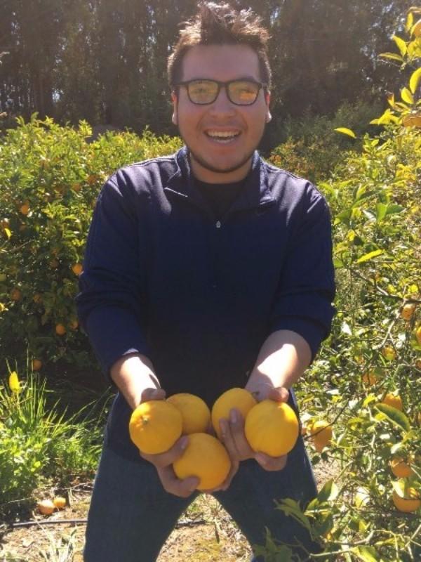 Mark from Sequoia High School in Watsonville harvesting Meyer Lemons, fresh!
