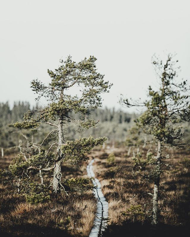 Still no winter in Småland... _______________ • Canon 1Dx mk2 | Canon 70-200mm f/2.8 IS II •