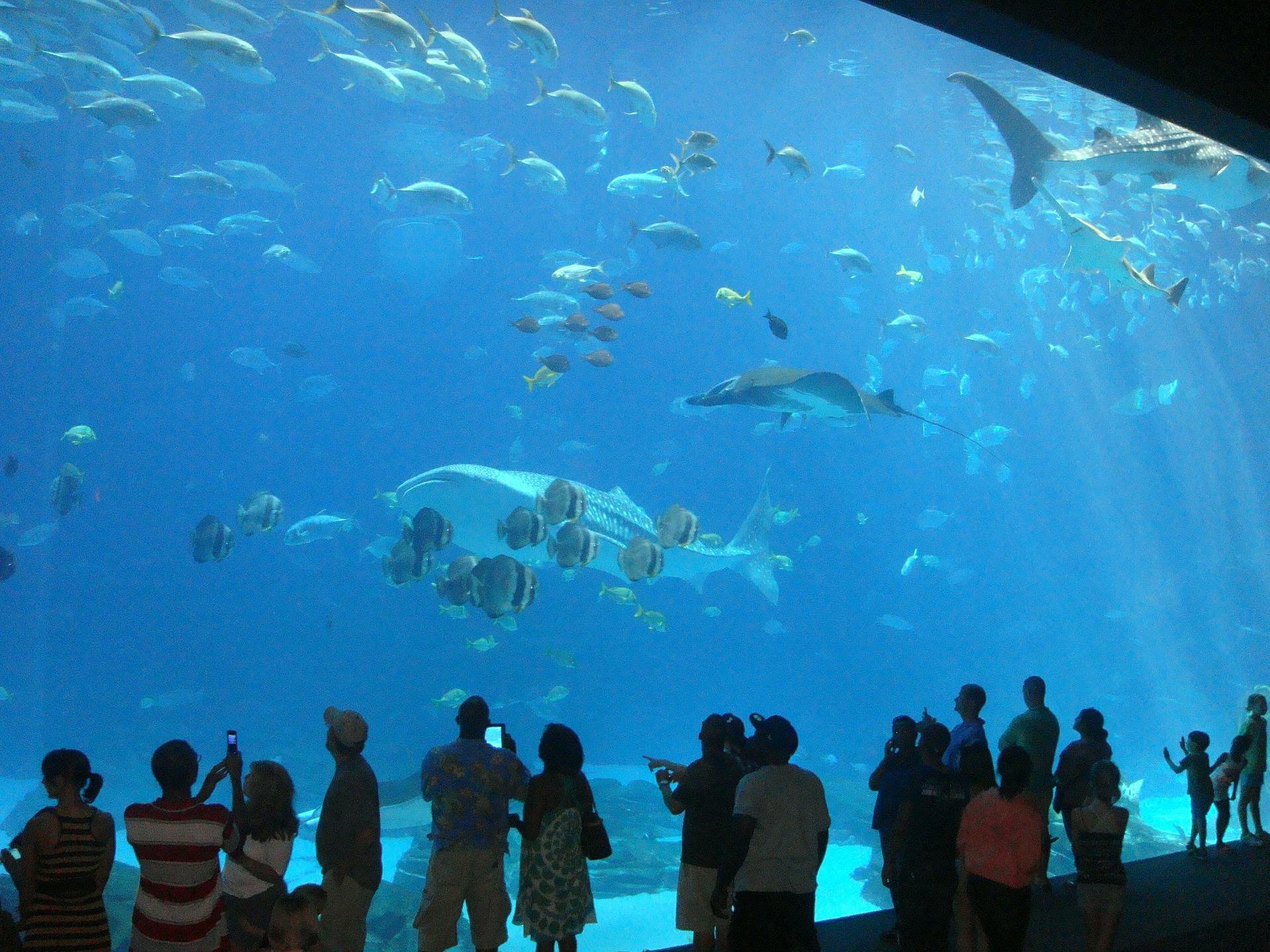 aquarium-456566_1920.jpg