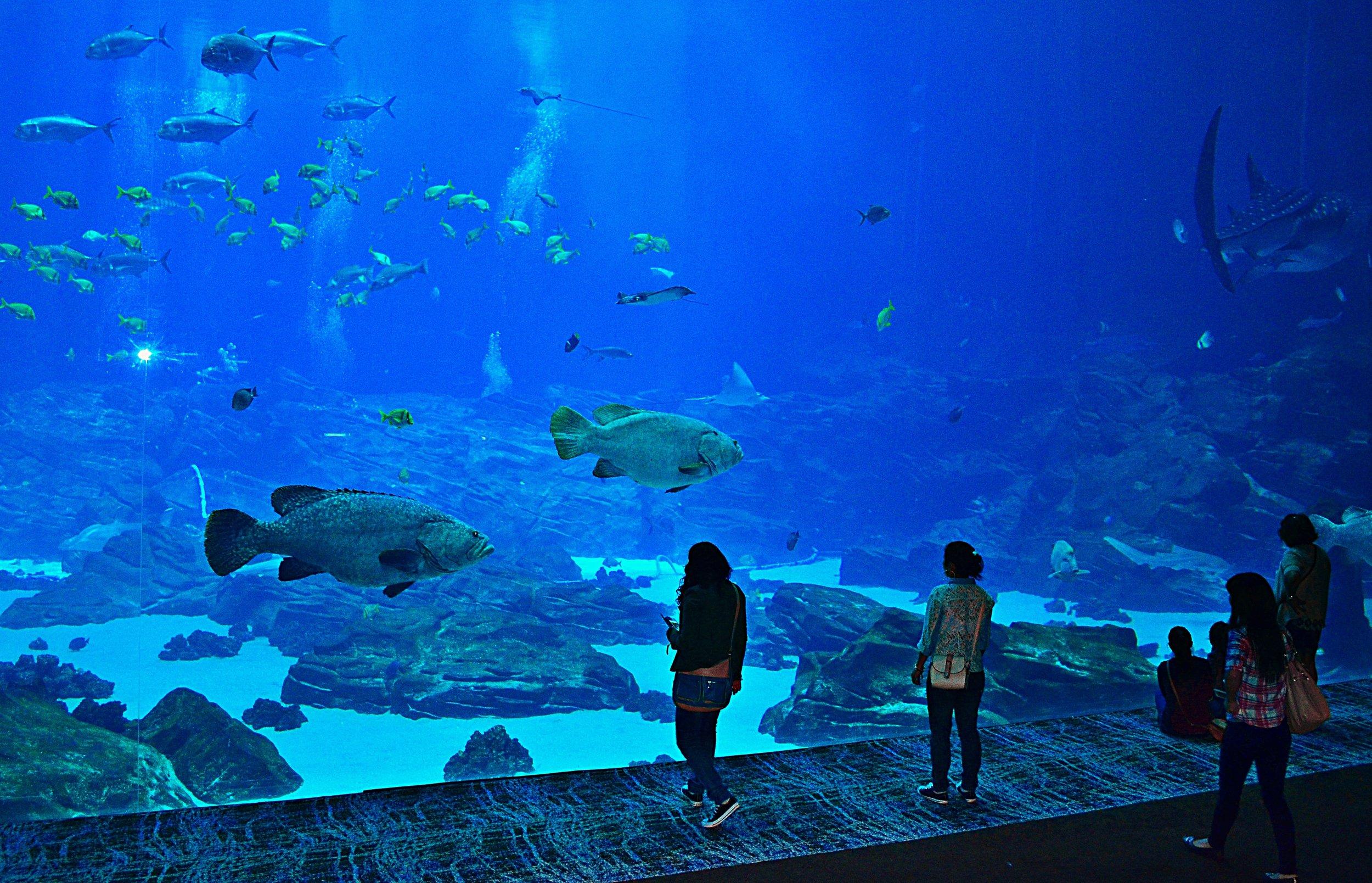 aquarium-736978.jpg