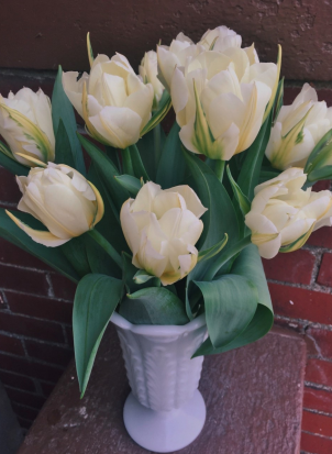 Exotic Emperor Tulips