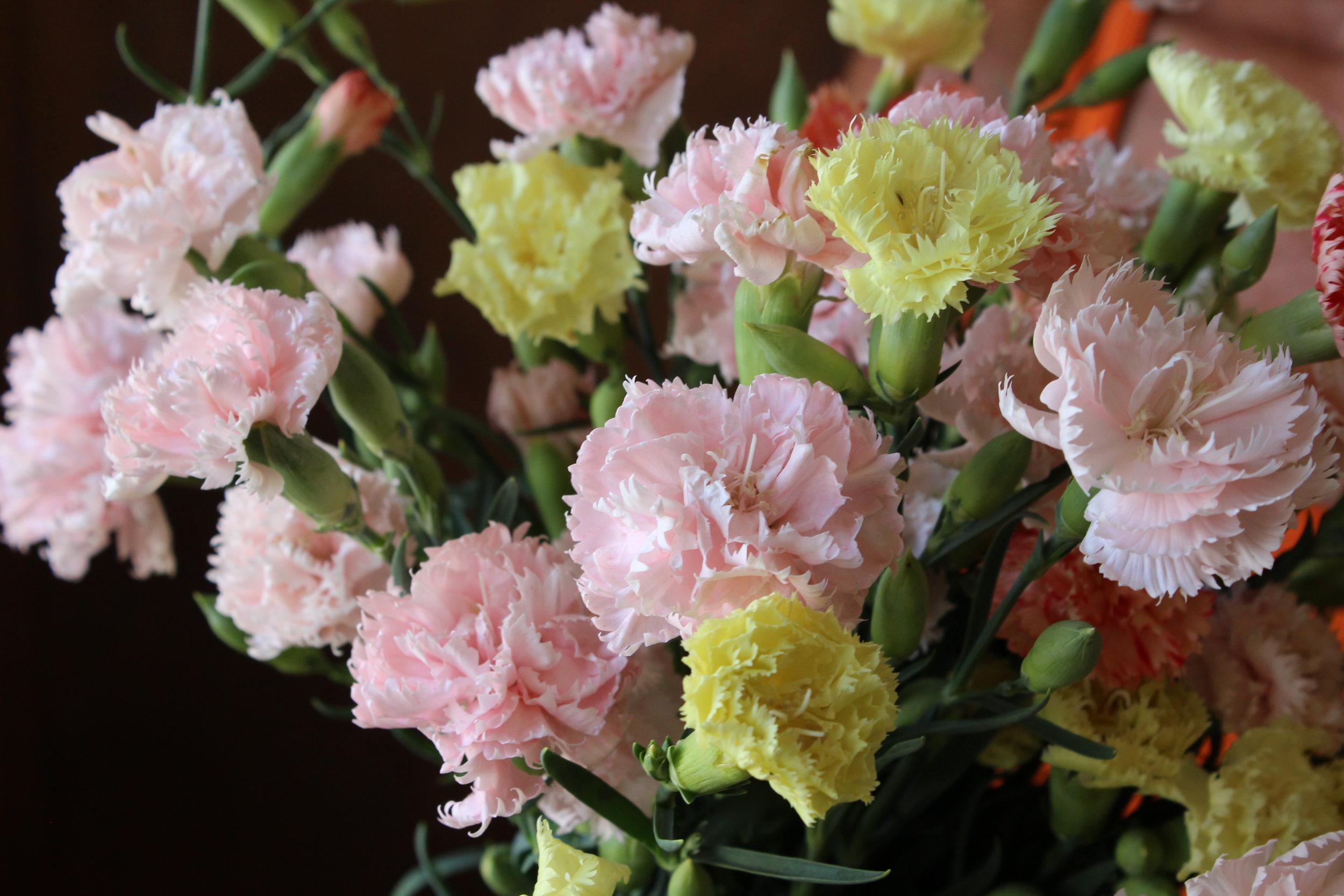 Chabaud Carnations