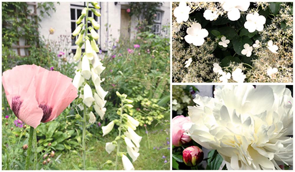 albaquirky_studio_garden